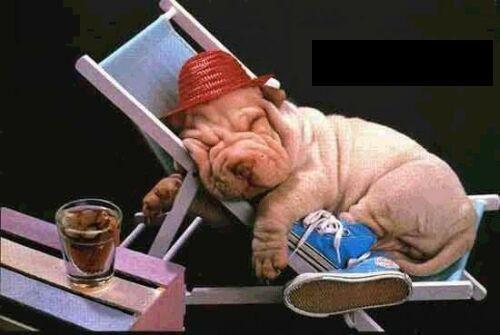 ico_cane_che_dorme